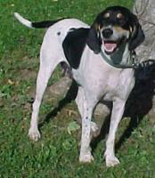Photo of Ruby the hounddog